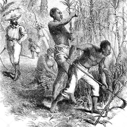 Dunkle Geschichte von Guadeloupe - Sklavenarbeit auf den Plantagen