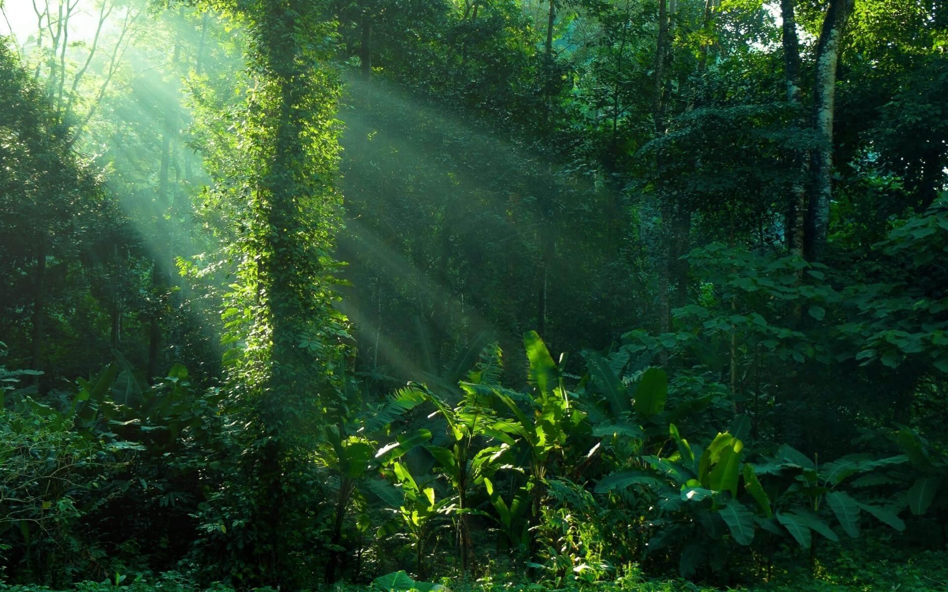 Regenwald von Guadeloupe