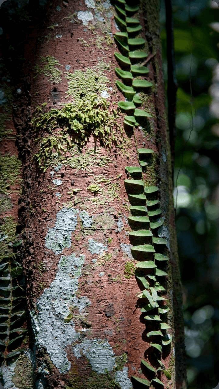 Guadeloupe's Flora-Auf dem Bild sieht man wie sich zahlreiche Pflanzensorten am Stamm ansiedeln.
