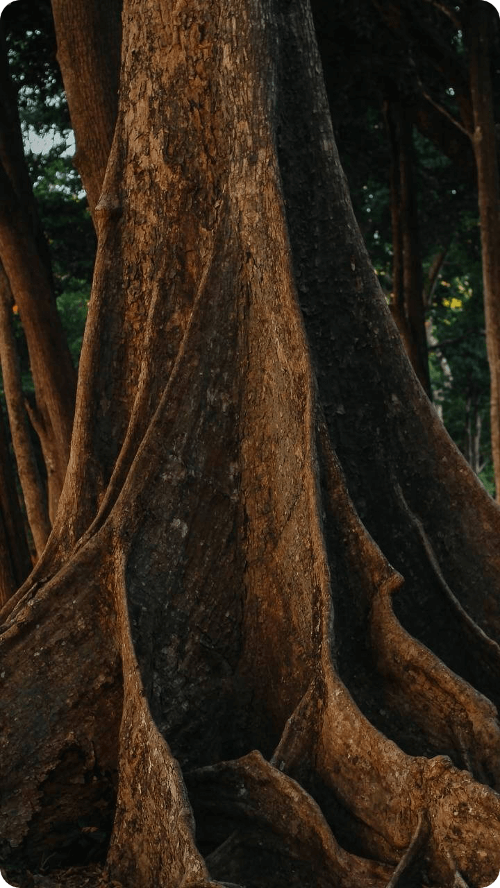 Guadeloupe's Flora beherbergt auch den Brettwurzelbaum.
