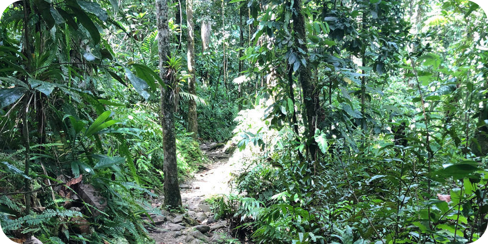 Rainforest in Guadeloupe, Bleupearl's Tour A - Paradiese von Basse-Terre