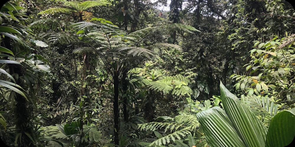 Farne und Bäume des Regenwaldes, Bleupearl's Tour A - Paradiese von Basse-Terre