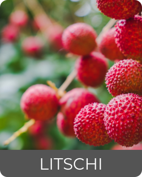 Litschi Früchte gehören ebenfalls zur Flora