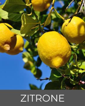 Bild einer Zitronen-Pflanze